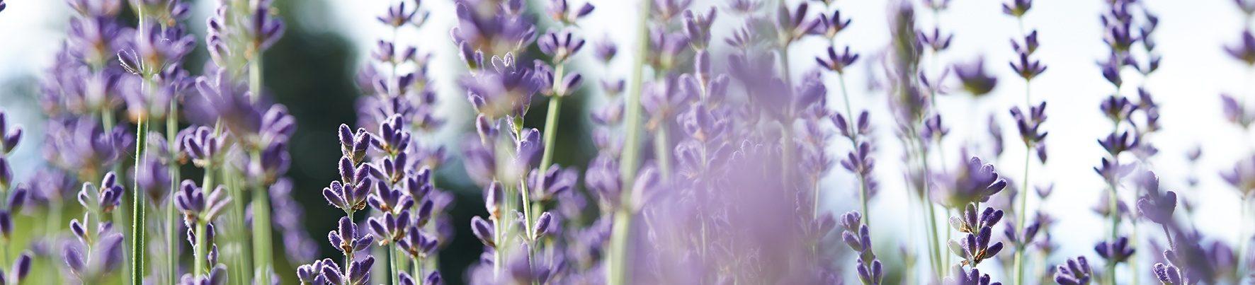 Nerola Organic Treatments